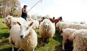 """Maioria dos pastores não disciplina membros por """"comportamento pecaminoso"""""""